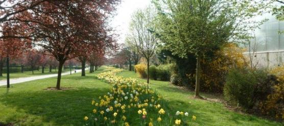 50% de Crédit d'impôt pour l'entretien de votre Jardin, c'est possible !