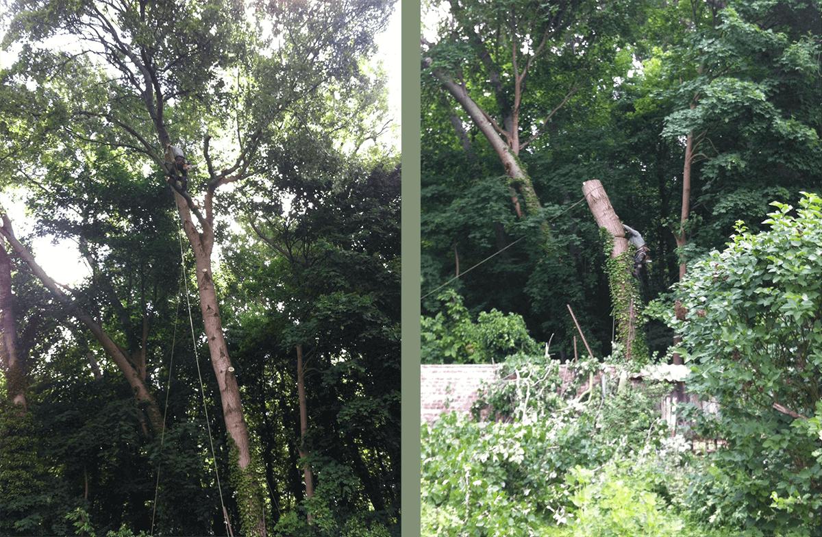 Abattage d'un arbre en Essonne