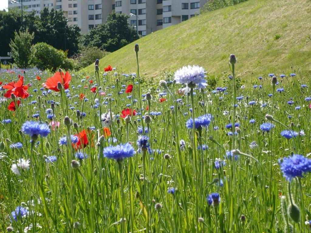 Copropriétés, comment établir un contrat d'entretien pour vos espaces paysagers ?