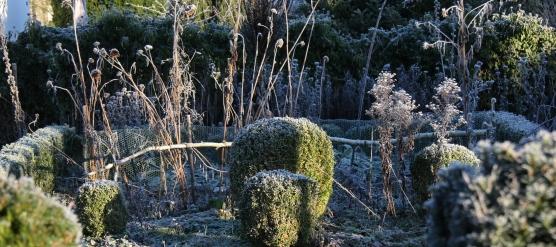 L'hiver dans votre jardin : une saison pas de tout repos