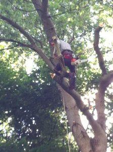 abattage arbre Essonne
